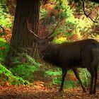 Deer Stalking by naturelover