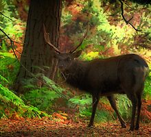 Deer Stalking by naturelover