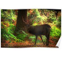 Deer Stalking Poster