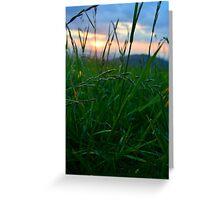 Grass Field At Dusk Greeting Card