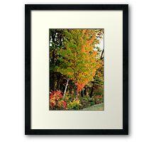 Fall at The Sherburne National Wildlife Refuge Framed Print