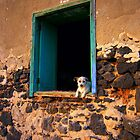 Puppy in the window by Madeleine Forsberg