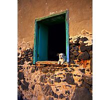 Puppy in the window Photographic Print