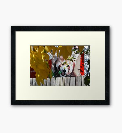 KOOL Neighbor! Framed Print