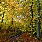 Autumnal forest lane by photontrappist