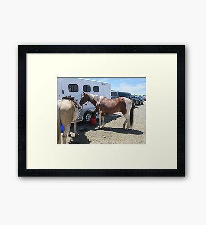 paint horse Framed Print