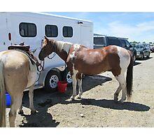 paint horse Photographic Print