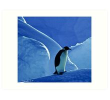 Emperor Penguin, Antarctica Art Print