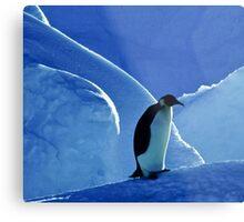 Emperor Penguin, Antarctica Metal Print