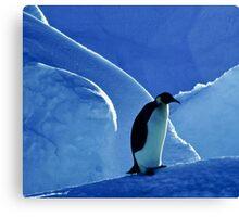 Emperor Penguin, Antarctica Canvas Print