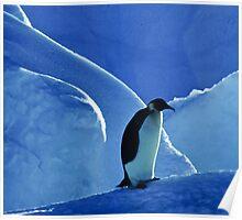 Emperor Penguin, Antarctica Poster