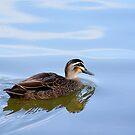 Australian Wild Duck by poinsiana