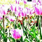 Twinkling Tulips  by Beverley  Johnston