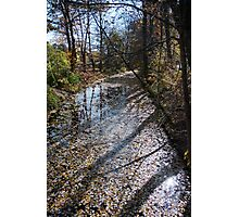 Canal Path Photographic Print