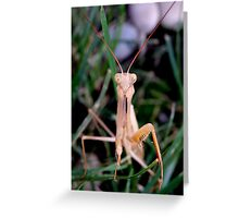 Mantis - In The Grass Greeting Card