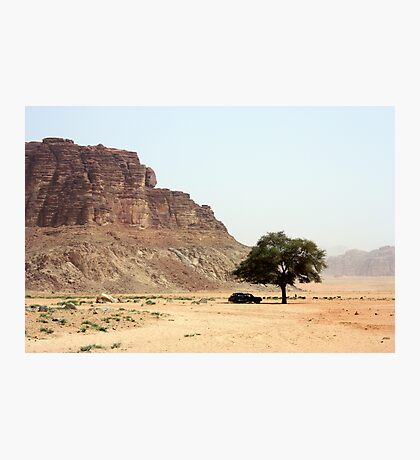 Tree in the Desert Photographic Print