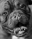 Dogue de Bordeaux by Helen Green
