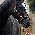 Zenyatta at Del Mar 2010 by ElfinYeti