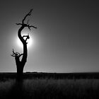 Scary Tree - Myponga Beach Road by Ben Loveday