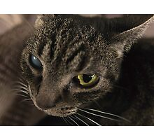 Blindcat Photographic Print