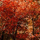 In the Middle of Fall by leslie wood
