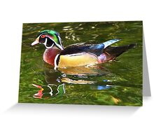 Wood Duck ~ Male Greeting Card