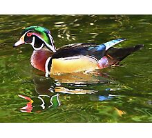 Wood Duck ~ Male Photographic Print