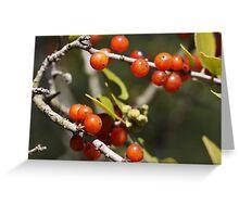 Youpon Berries - Lady Bird Johnson Wildflower Center Greeting Card