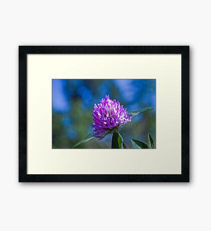 Clover Closeup with Blue Sky Framed Print
