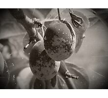 Two plums (black and white) Photographic Print