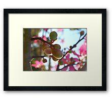 Tree flower pods Framed Print