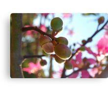 Tree flower pods Canvas Print