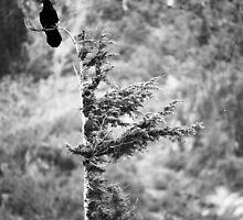 Black Bird by Cami Hagen
