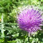 Thistle Flower by Lorrie Davis