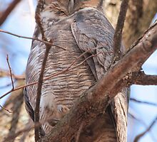 Great Horned Owl (meet Boeing) by Bradley Nichol