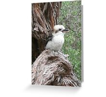 Kookaburra in a Tea-tree Greeting Card