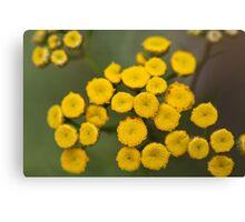 Tansy Flowers Tanacetum vulgare Canvas Print
