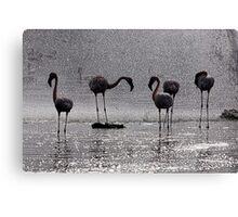Flamingos at the Geysir of Lake Bogoria Canvas Print