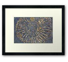 Pyritized Ammonite Framed Print