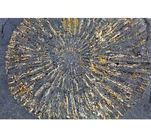 Pyritized Ammonite Photographic Print