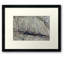 Fragile Fossil Plant Leaf Framed Print