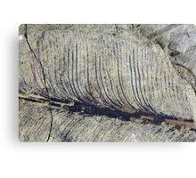 Fragile Fossil Plant Leaf Canvas Print