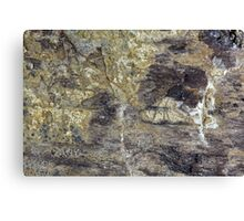 The Surface of Fossil Wood Canvas Print