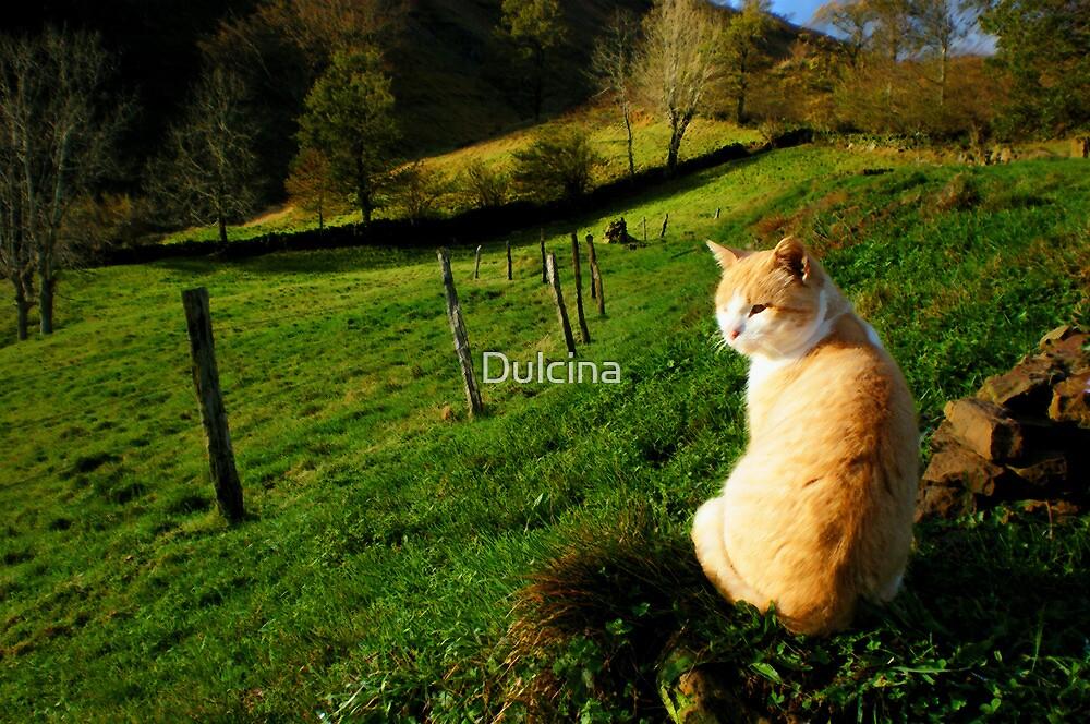 Cute cat by Dulcina
