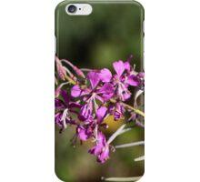 Flowers of fireweed (Chamerion angustifolium). iPhone Case/Skin