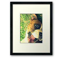 Happy Boxer Framed Print