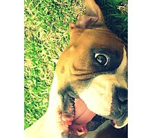 Happy Boxer Photographic Print