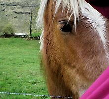 Horse eye by Dulcina