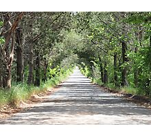 GREEN LANE Photographic Print