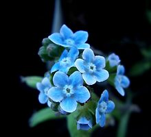 Little Blues by Inga McCullough